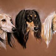 'we Three Salukis' Art Print