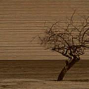 Weatherd Beach Tree Art Print