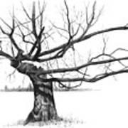 Weathered Old Tree Art Print