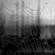 Web Water And Sailboats Art Print