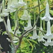 Wedding Bells Art Print