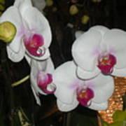 Wedding Orchids Art Print