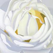 Wedding Rose Art Print