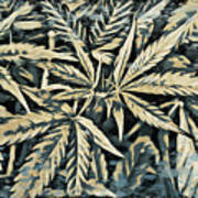 Weed Abstracts Four Art Print