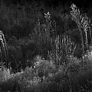 Weeds 5 Art Print