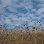 Weeds And Dappled Sky Art Print