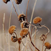 Weeds Are Pretty Too Art Print