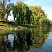 Weepin Willows Frankenmuth Cass River Art Print