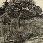 Weeping Tree Art Print