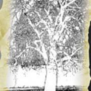 Weeping Willow Designer Art Print