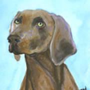 Weimarainer Dog Art Art Print