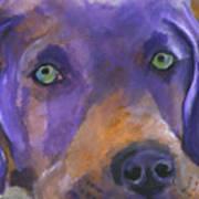 Weimaraner Dog Art Art Print