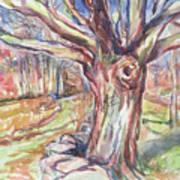 Weir Farm Oak Tree Art Print