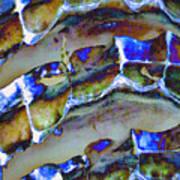 Welk Shell Art Print