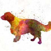 Welsh Springer Spaniel In Watercolor Art Print