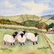 Wensleydale Sheep Art Print