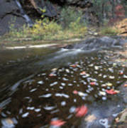 West Fork Oak Creek And Fall Color Print by Rich Reid