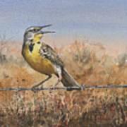 Western Meadowlark Art Print