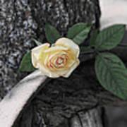 Western Yellow Rose Iv Art Print
