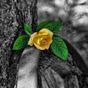 Western Yellow Rose Two Tone Art Print