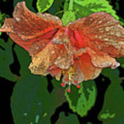 Wet Hibiscus Art Print