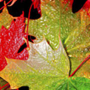 Wet Leaves Of Fall Art Print