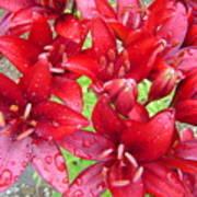 Wet Lilies Art Print