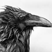 Wet Raven Art Print