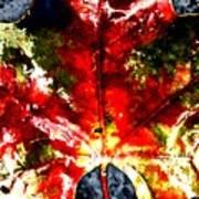 Wet Single Leaf Art Print