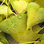 Wet Yellow Leaves 2 Wc  Art Print