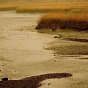 Wetland Stream Art Print
