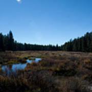 Wetlands In The Woods Art Print