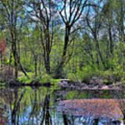 Wetlands Lake Art Print