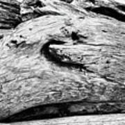 Whake Driftwood Art Print