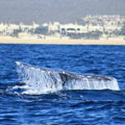 Whale Tail In Cabo Art Print