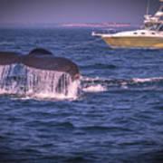 Whale Watching - Humpback Whale 3 Art Print