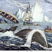 Whaling, 1833 Art Print by Granger