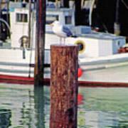 Wharf Gull Art Print