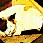 What Do Cats Dream Of Art Print