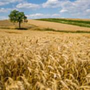 Wheat And A Tree Art Print