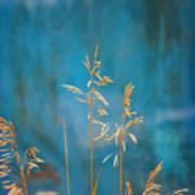 Wheat On Blue 1 Art Print