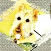 Wheaten Scottish Terrier - During Sickness And Health Art Print