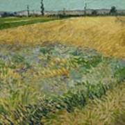 Wheatfield Arles, June 1888 Vincent Van Gogh 1853 - 1890 Art Print