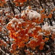When Fall Meets Winter Art Print