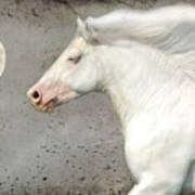 When Horses Dream Art Print