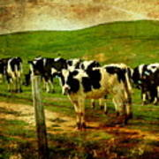 When The Cows Come Home . Photoart Art Print