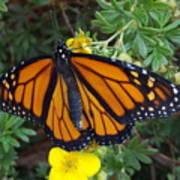 When The Rain Clears Monarch Butterfly Art Print