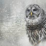 When Winter Calls Owl Art Art Print
