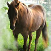 When You Dream Of Horses Art Print