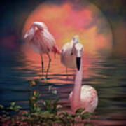 Where The Wild Flamingo Grow Art Print